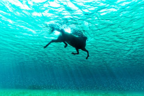 sea-horse-swimming-underwater-photo