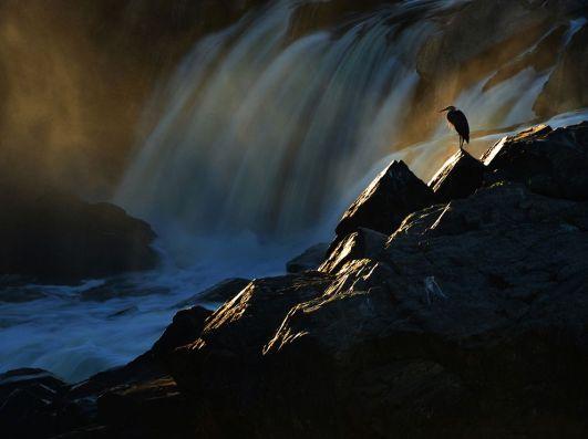 blue-heron-great-falls_82425_990x742