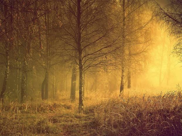 autumn-morning-lithuania-fog_83583_990x742