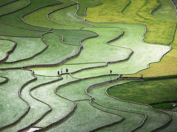terraced-rice-paddies-hmong-ngpc2015_92125_990x742