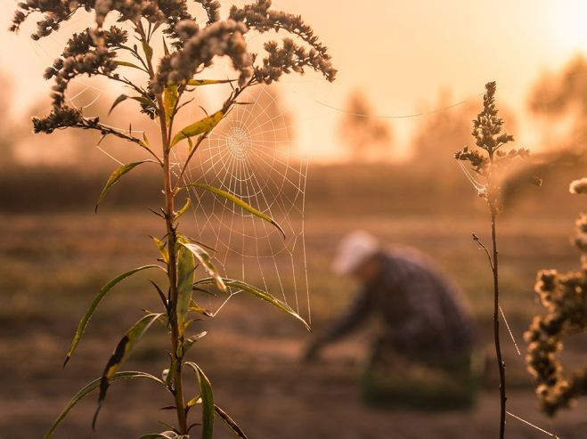 poland-spiderweb-farm_94436_990x742